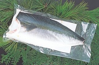 Farmed Young Yellowtail