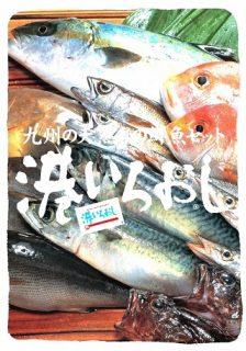 季節の鮮魚
